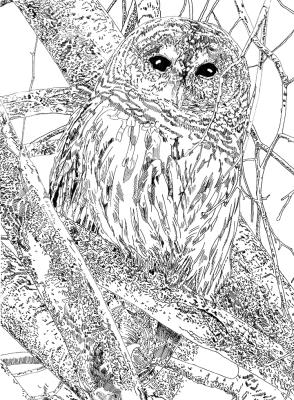 Hitt Street Owl